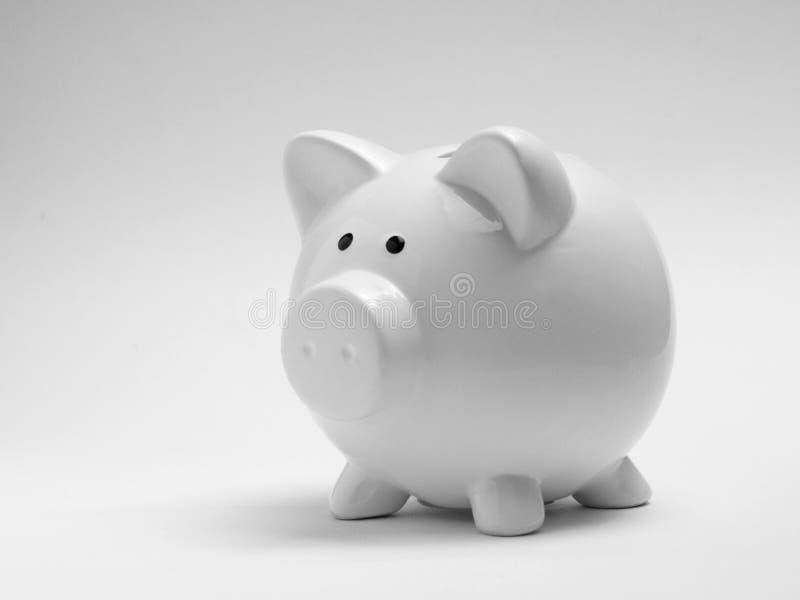 Weiße Piggy Querneigung lizenzfreie stockfotos