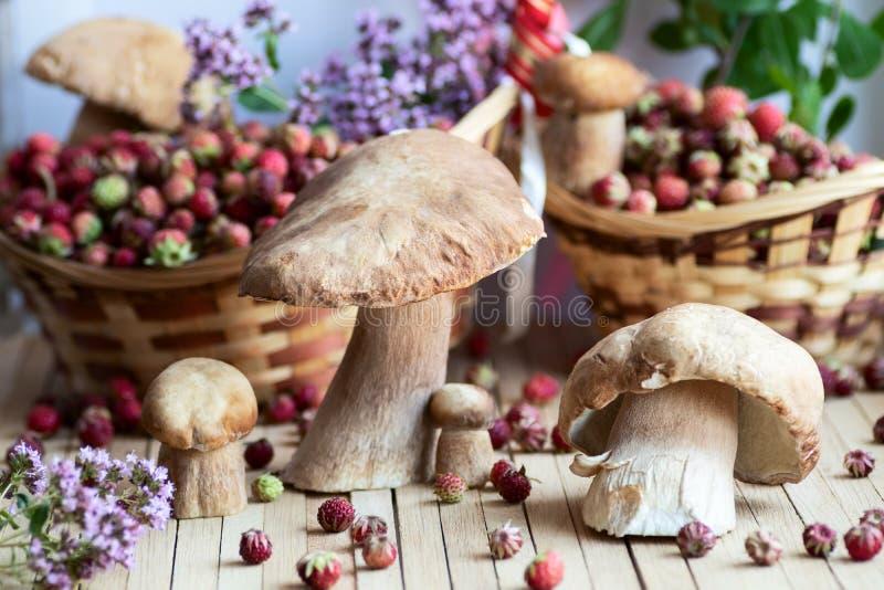 Weiße Pilze, Boletus holten von einer Wanderung im Wald ausgebreitet auf einem natürlichen Holztisch, der durch wilde Beeren umge lizenzfreie stockfotografie