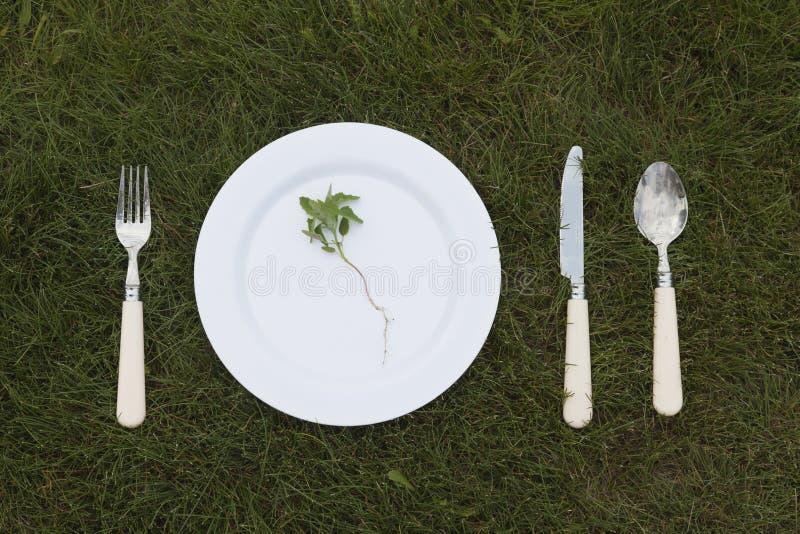 Weiße Platte auf Gras lizenzfreie stockfotos