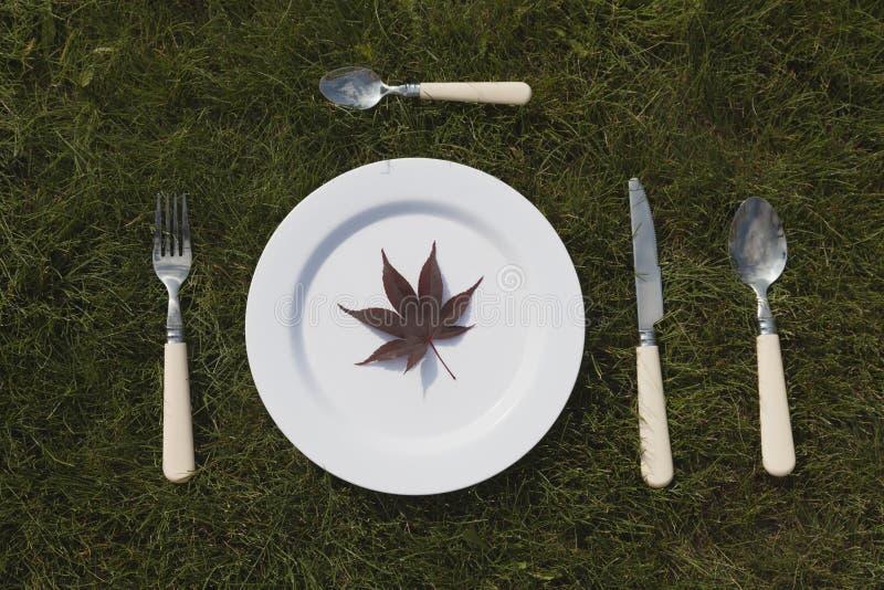 Weiße Platte auf Gras lizenzfreies stockfoto