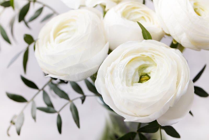 Weiße Ranunculusblumen im Vase Grauhintergrund lizenzfreie stockbilder