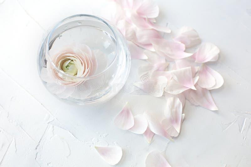 Weiße Ranunculusnahaufnahme in einem Vase und in den Blumenblättern auf einem grauen strukturellen Hintergrund lizenzfreies stockbild