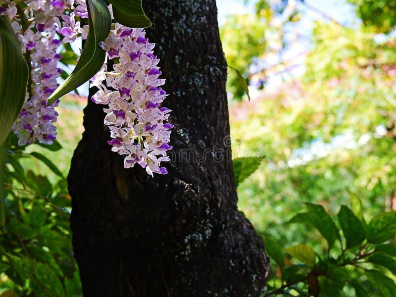 Weiße rchid Blume lizenzfreies stockfoto