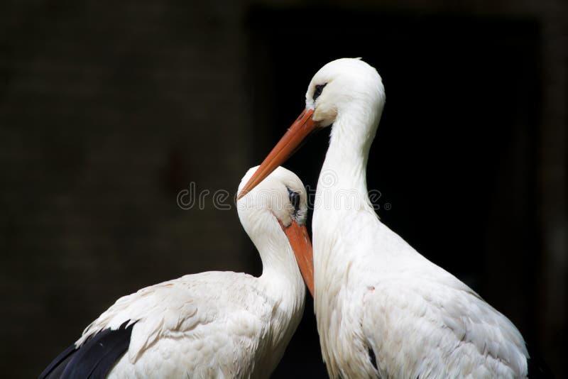 Weiße Reiher vom Zoo stockbild