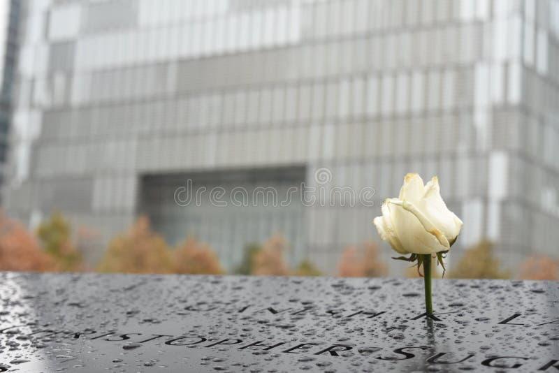 Weiße Rose am Bodennullpunkt stockfotografie