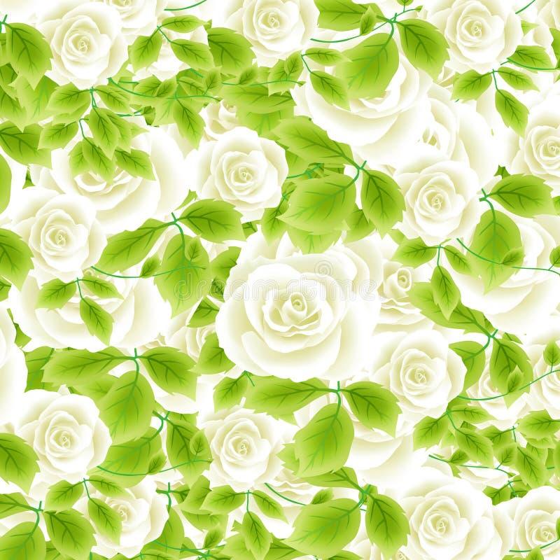 Weiße Rosen stock abbildung