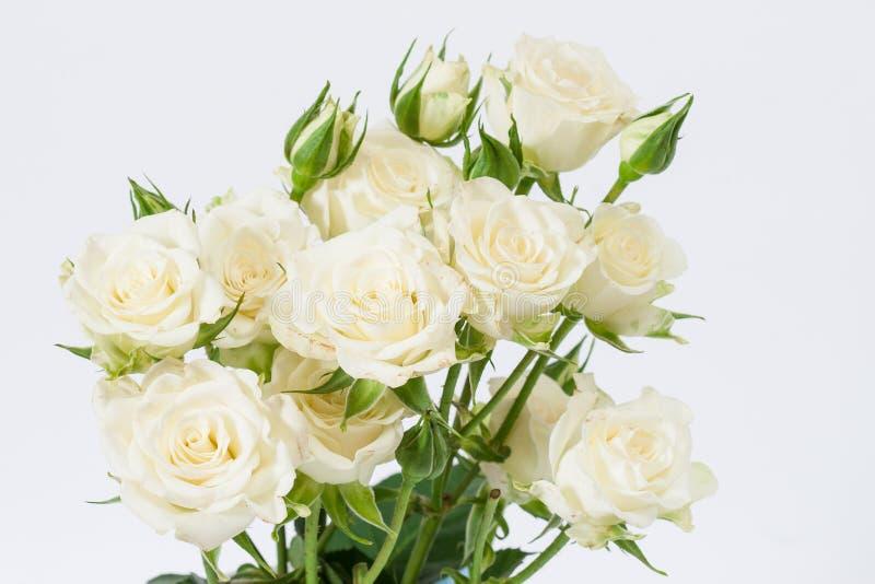Weiße Rosen stockbild