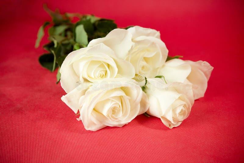 Weiße Rosen auf Rot lizenzfreie stockfotografie