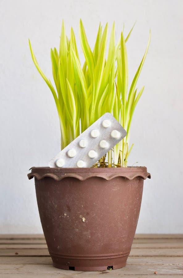Weiße runde Tablet-Pille in einer Blisterpackung in Brown-Topf der kleinen Grünpflanze lizenzfreie stockfotos