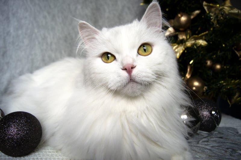 Weiße schöne Katze mit grünen Augen liegt auf einem grauen Schal auf dem Hintergrund eines Weihnachtsbaums und der festlichen, hö stockfotos