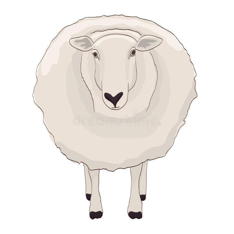 4 Weiße Schafe lizenzfreie stockbilder