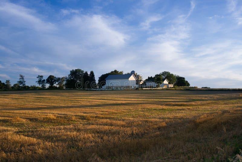 Weiße Scheune mit goldenem Feld und blauer Himmel mit weißen Wolken lizenzfreies stockfoto
