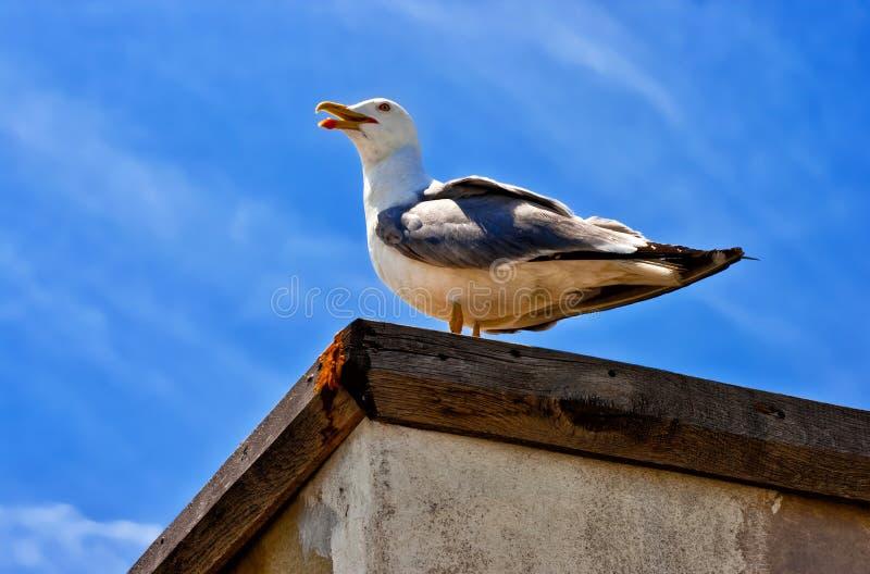 Weiße Seemöwe, die auf der Wand gegen den blauen Himmel sitzt stockfotos