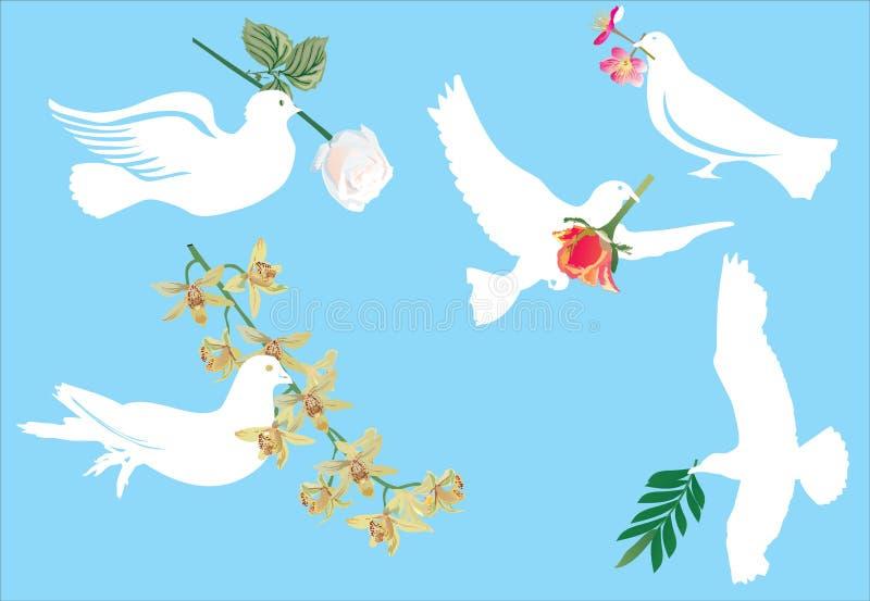 Weiße Taube und Blumen stock abbildung