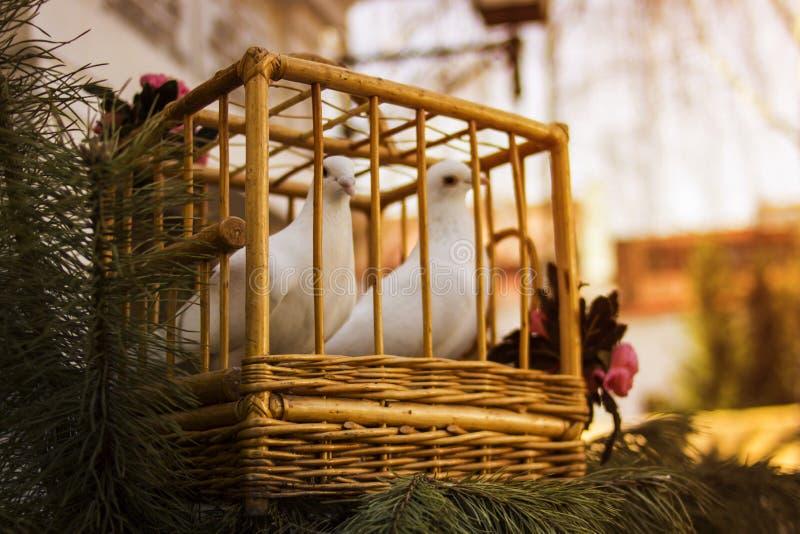 Weiße Tauben in einem hölzernen Käfig Vogel in einem Käfig lizenzfreie stockfotos