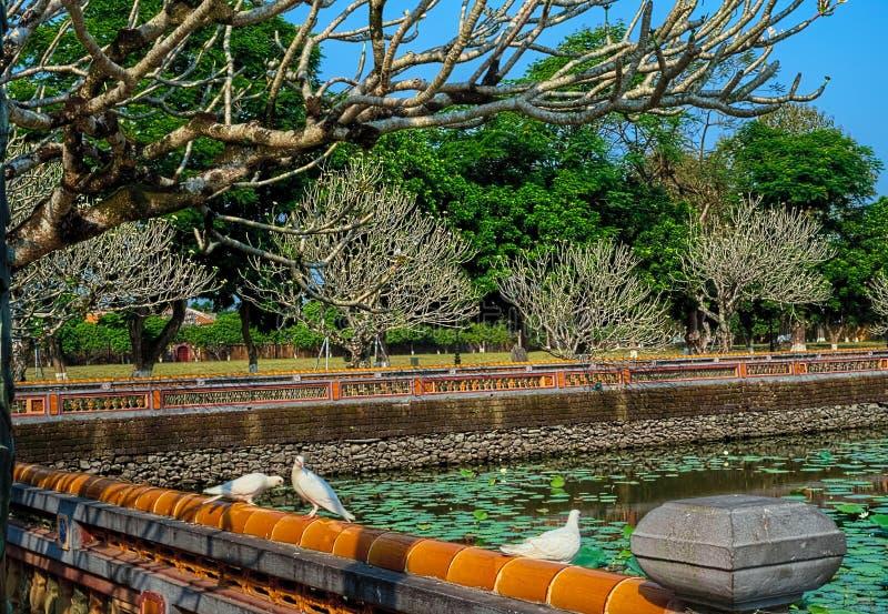 Weiße Taubenvögel durch den Farbzitadellen-Eingangssee lizenzfreies stockbild