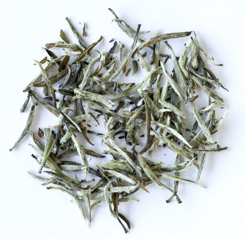 Weiße Teeblätter lizenzfreies stockfoto