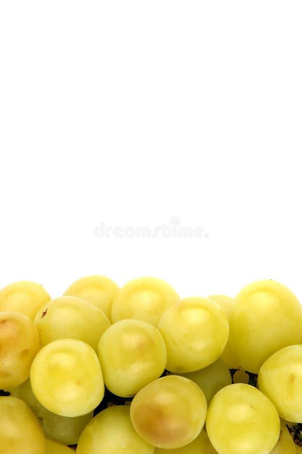 Weiße Trauben stockbilder
