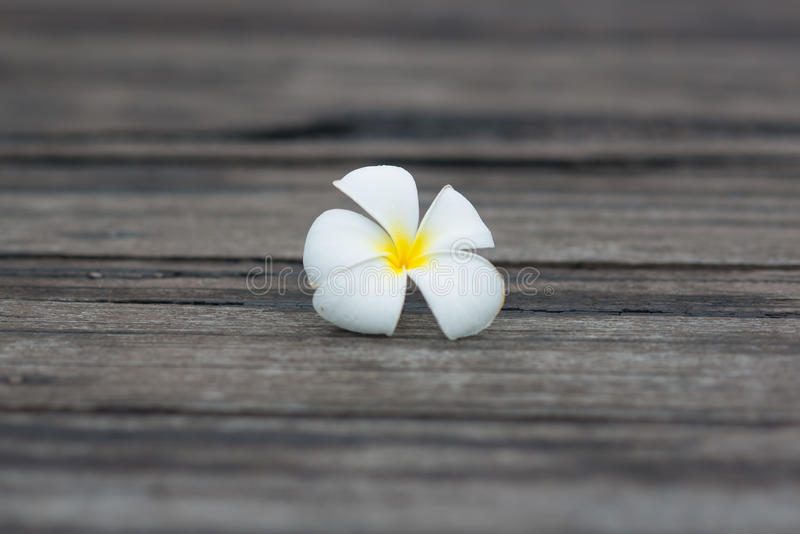 Weiße tropische Blume auf dem alten hölzernen Hintergrund des Schmutzes stockfotografie