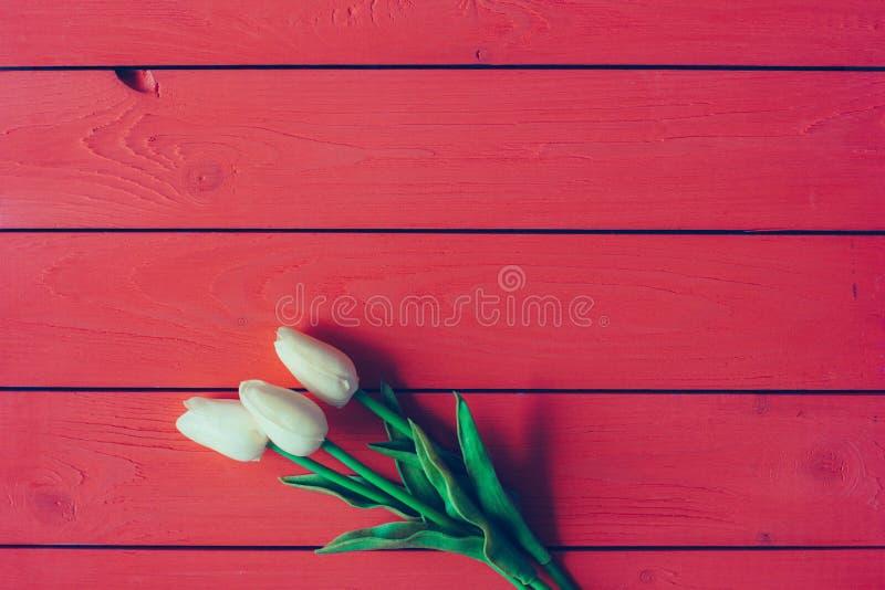 Weiße Tulpen auf einem roten hölzernen Hintergrund mit Raum für Text stockbild