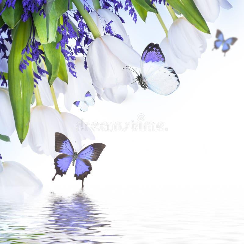 Weiße Tulpen mit blauem Gras und Schmetterling stockfotografie