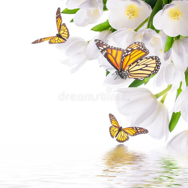 Weiße Tulpen mit grünem Gras lizenzfreie stockbilder