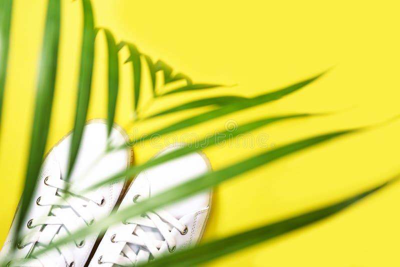 Weiße Turnschuhe liegen unter dem Schatten der Palme auf gelbem Hintergrund stockfoto