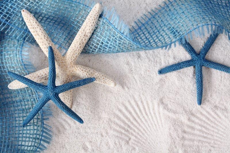 Weiße und blaue Seesterne stockfotografie