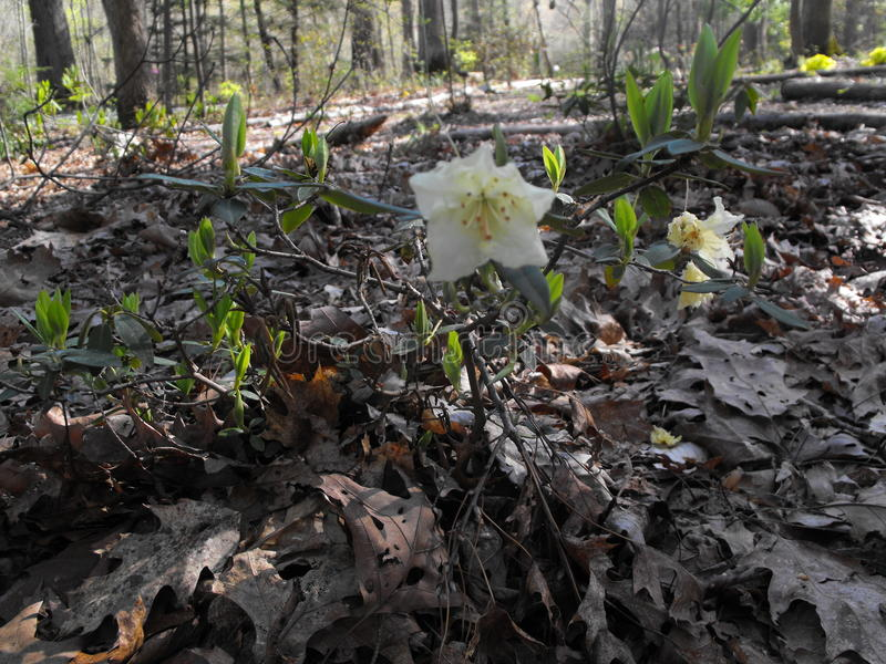 Weiße und gelbe Blumen lizenzfreies stockfoto