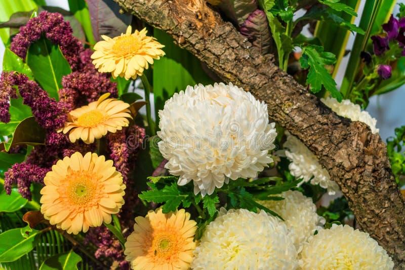 Weiße und gelbe Blumen mit Baumast lizenzfreies stockfoto
