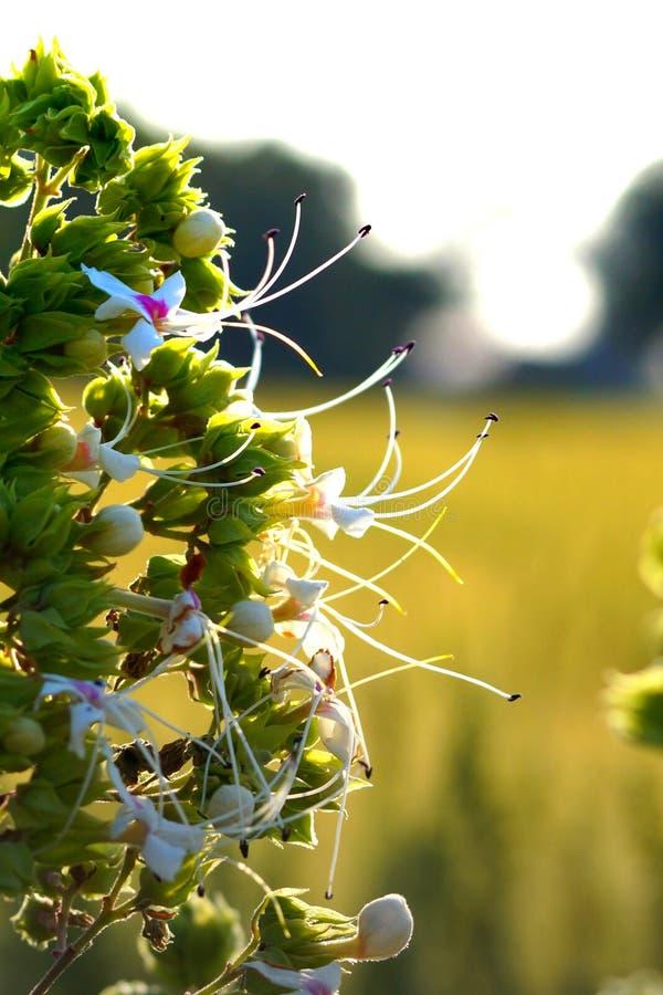Weiße und grüne schöne Blumen stockbild