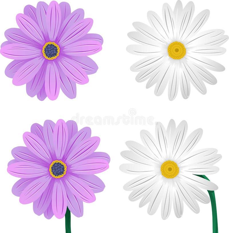 Weiße und purpurrote Orchidee [Vektor] lizenzfreie abbildung