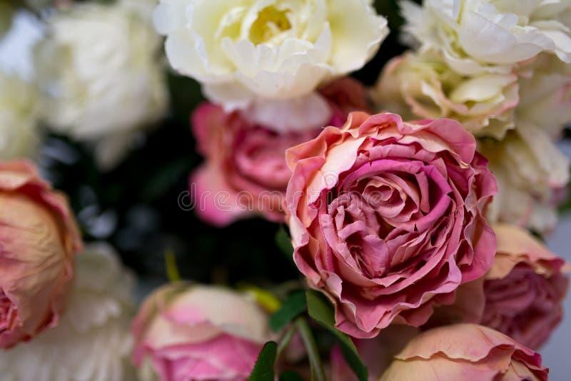 Weiße und rosafarbene Rosen stockfoto