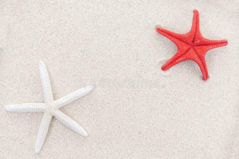 Weiße und rote Starfishes auf Sand, Raum für Text stockbilder