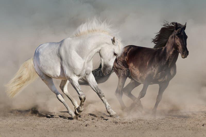 Weiße und schwarze Pferde stockfotografie