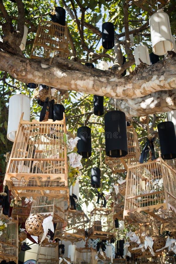 Weiße Vögel aus ihrem leblosen Konzept der Käfige heraus, Foto auf Lager lizenzfreies stockfoto