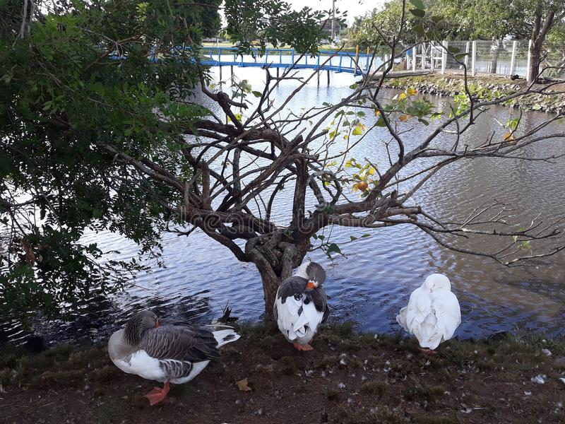 Weiße Vögel lizenzfreies stockfoto