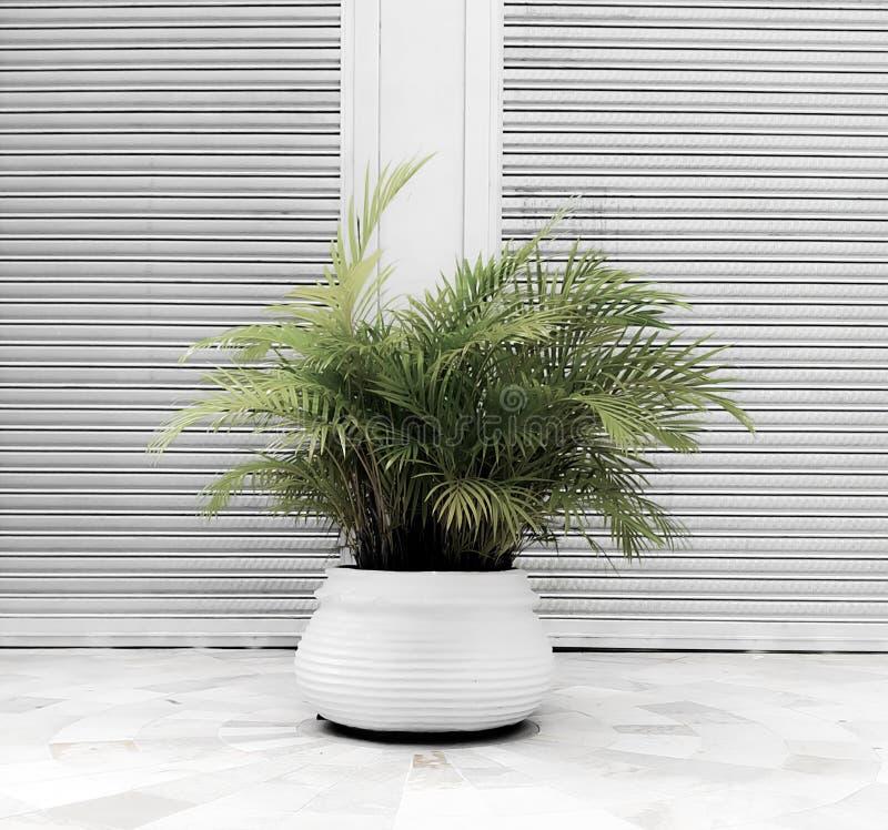 Weiße Vasengrünblätter stockbilder