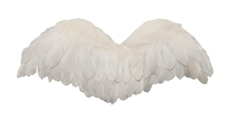 Weiße Vogel-Flügel stockfotos
