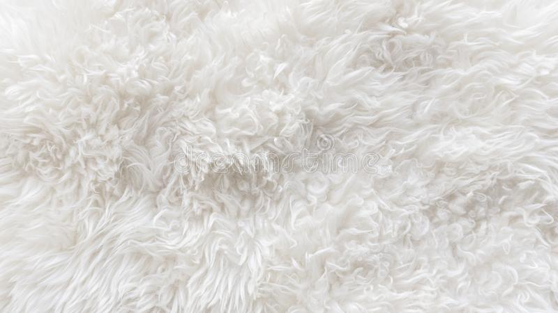 Weiße weiche Wolle masert Hintergrund, nahtlose Rohbaumwolle, natürliche Schafwolle des Lichtes, Nahaufnahmebeschaffenheit des we stockfotografie