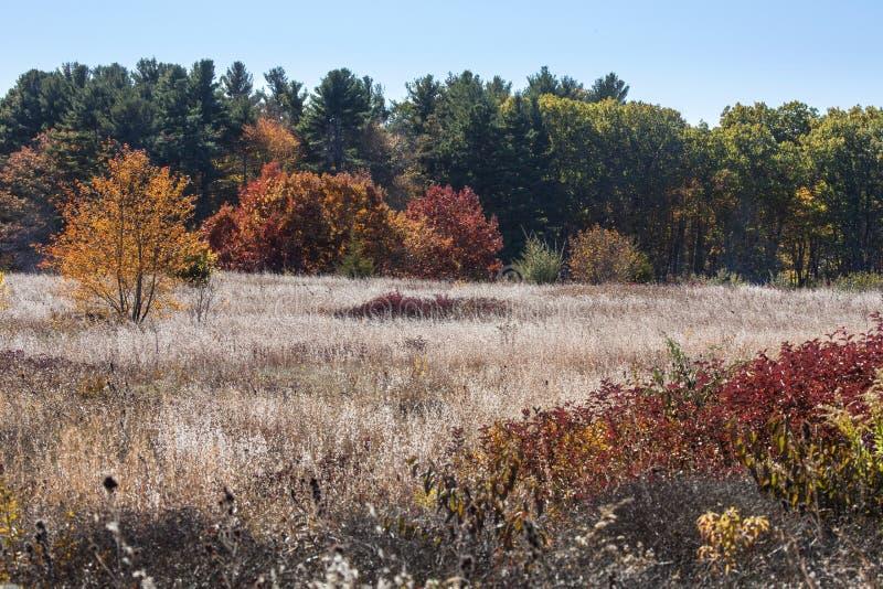 Weiße Wildflowers im Gewann und im Herbstlaub, Mansfield, Betrug stockfoto