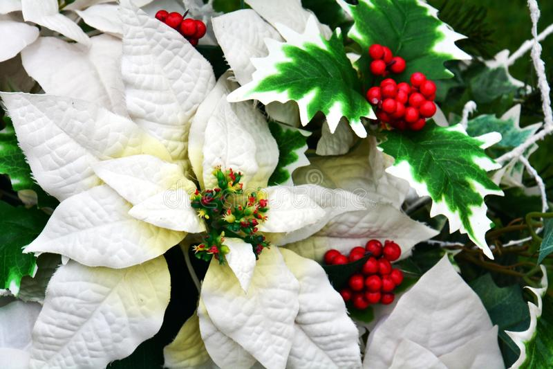 Weiße Winterblumen und Blätter, romantischer Blumenhintergrund stockbild