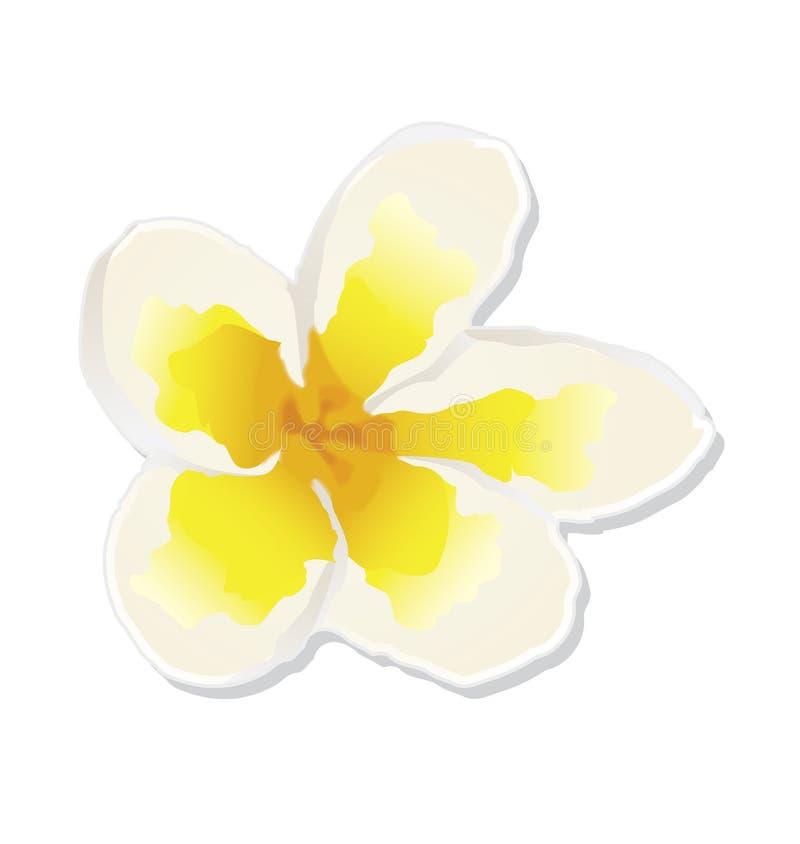 Weiße zarte Blume stock abbildung
