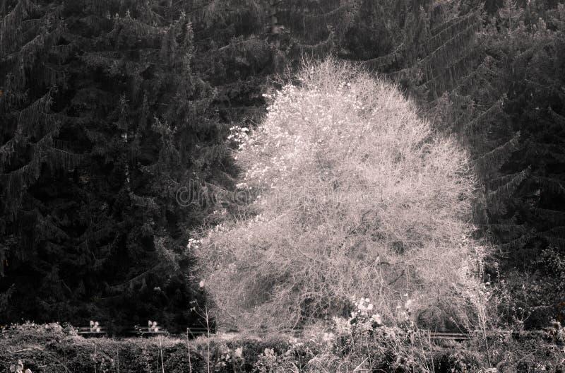 Weißer Baum lizenzfreies stockbild