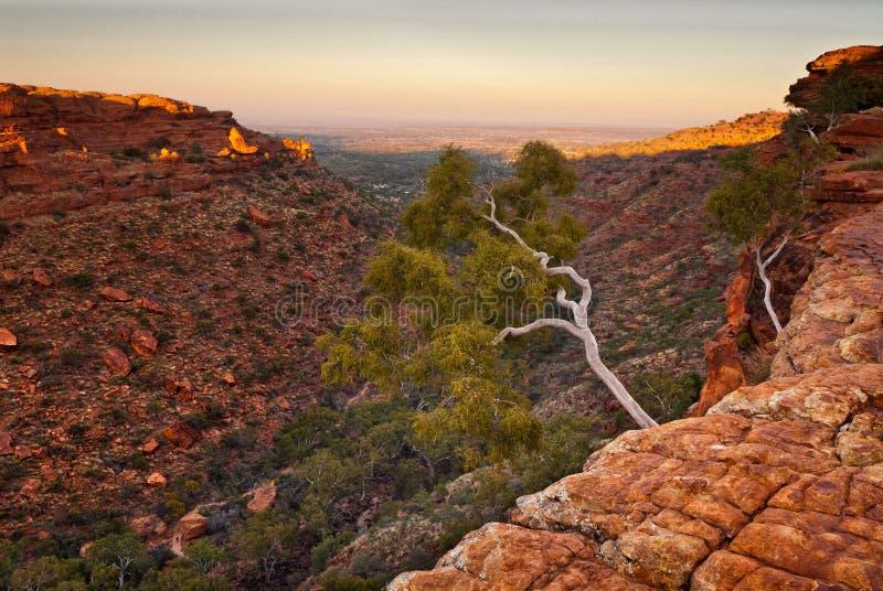 Weißer Baum auf Rand von König ` s Schluchtklippen, Australien lizenzfreie stockfotografie