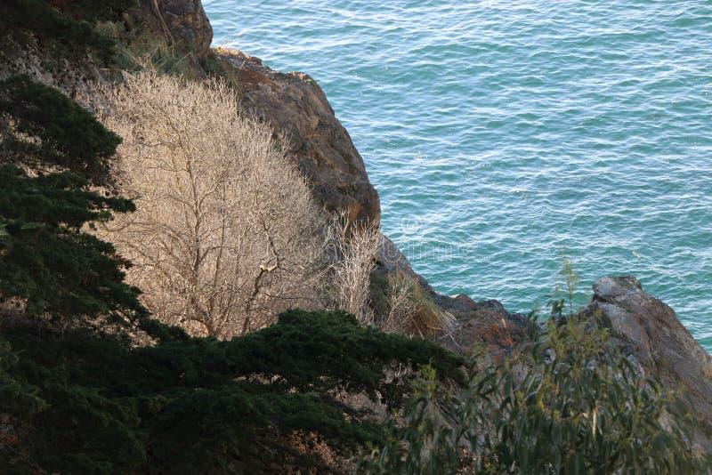 Weißer Baum mit bloßen Niederlassungen auf einer Klippe, Big Sur stockbild