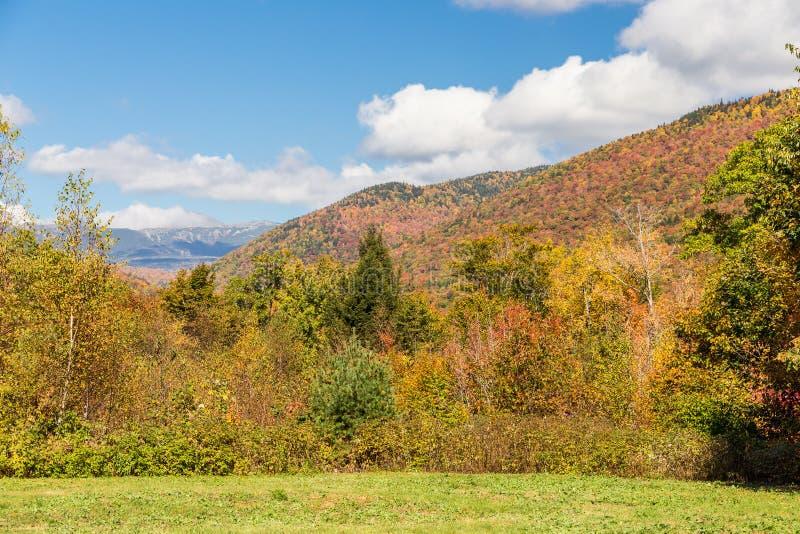 Weißer Bergstaatlicher wald im Herbst, New Hampshire lizenzfreies stockfoto