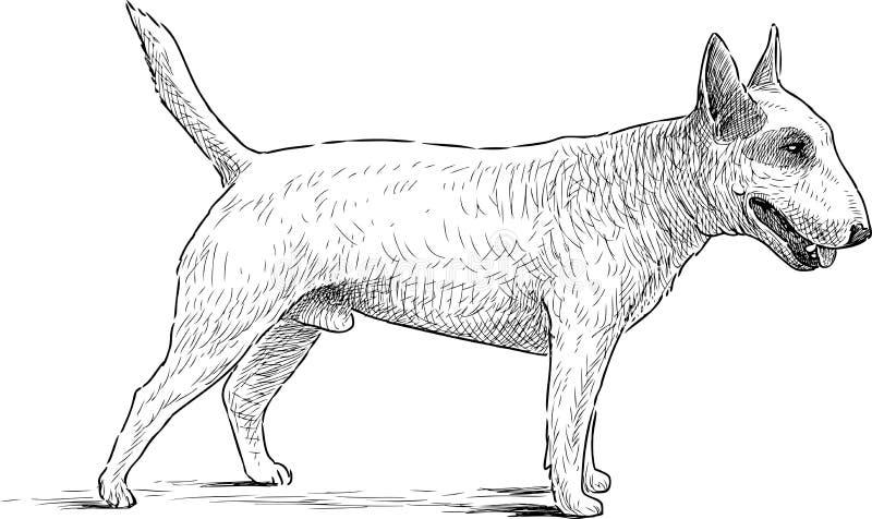 Weißer Bullterrier vektor abbildung