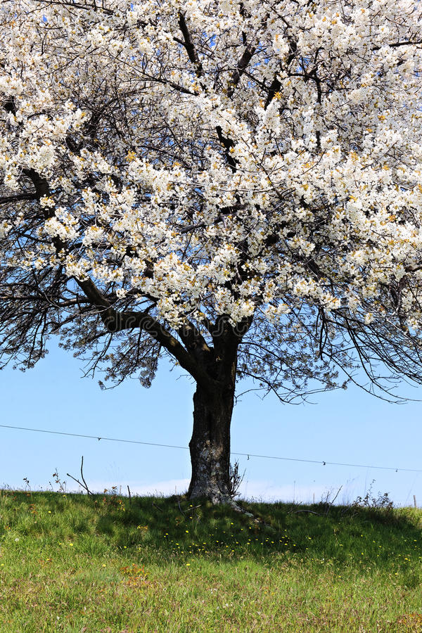Weißer Frühling lizenzfreie stockbilder