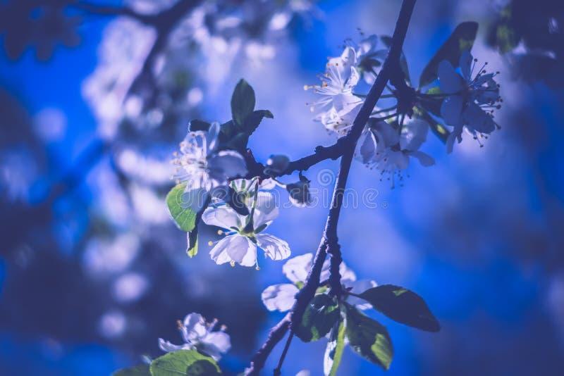 Weißer Frühlings-blühende Bäume Retro- Stockbild - Bild von ...